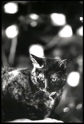 http://www.cooganphoto.com/temp/pets/little_miss-bw.jpg