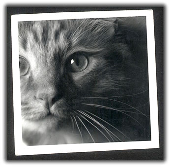 http://www.cooganphoto.com/temp/pets/roger-bw.jpg