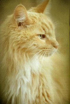 http://www.cooganphoto.com/temp/pets/roger.jpg